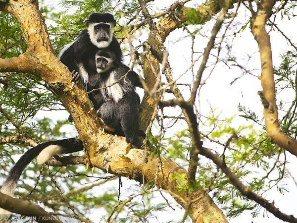 Uganda: 11 Tips for Travellers